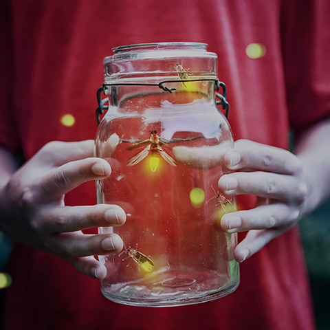 Fireflies in jar